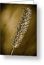 Grass Seedhead Greeting Card