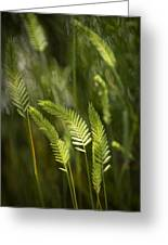 Grass Stems And Seed No.2129 Greeting Card
