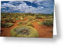 Grass Triodia Sp Covering Sand Dunes Greeting Card