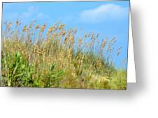 Grass Waving In The Breeze Greeting Card