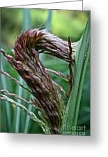 Grass Worm Greeting Card