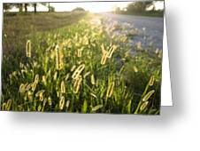 Grasses On A Nebraska Farm Greeting Card