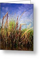 Grasses Standing Tall Greeting Card