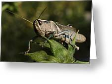 Grasshopper 2 Greeting Card