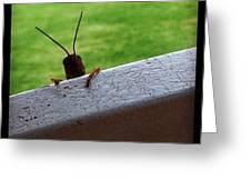 Grasshopper Greeting Card by Dana Coplin