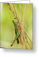 Grasshopper In Green Greeting Card