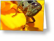 Grasshopper On Yellow Greeting Card by Maureen  McDonald