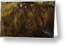 Grassland In Late Afternoon Greeting Card