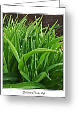 Grassy Drops Greeting Card