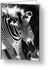 Gravy Zebra Greeting Card