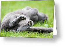 Gray Cat  Greeting Card