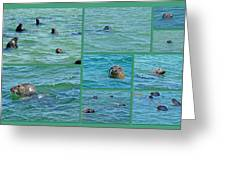 Gray Seals At Chatham - Cape Cod Greeting Card