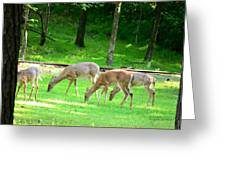 Grazing Doe Greeting Card