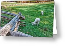 Grazing Farm Animals At Booker T. Washington National Monument Park Greeting Card by James Woody