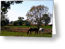 Grazing Horses Greeting Card