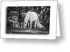 Grazing In Black And White Greeting Card