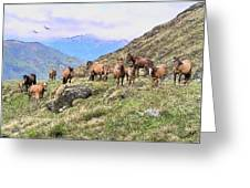 Grazing In The Foothills Greeting Card