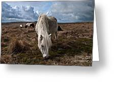 Grazing The Moor Greeting Card