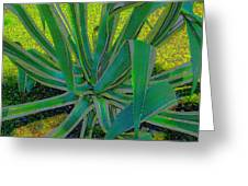 Great Agave Greeting Card
