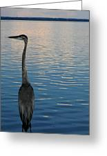 Great Blue Dusk Greeting Card