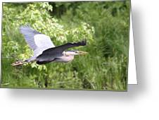 Great Blue Flight Greeting Card