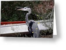 Great Blue Heron - Blue Man Flew Greeting Card
