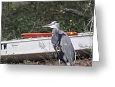 Great Blue Heron - Chicken Of The Sea Greeting Card