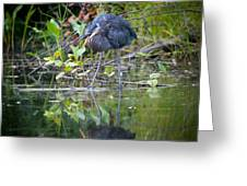 Great Blue Heron 2 Greeting Card