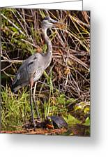 Great Blue Heron And Turtle Greeting Card