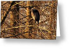 Great Blue Heron At Dusk Greeting Card