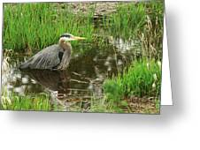 Great Blue Heron At The Marsh Greeting Card