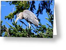 Great Blue Heron Concentration Greeting Card