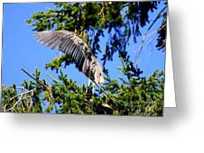 Great Blue Heron Cover Up Greeting Card