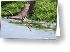 Great Blue Heron Escape Greeting Card