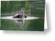 Great Blue Heron Having A Bath Greeting Card