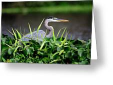 Great Blue Heron Hiding In The Grasses Greeting Card