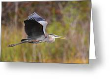Great Blue Heron In Flight II Greeting Card