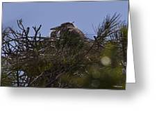 Great Blue Heron In Nest Greeting Card