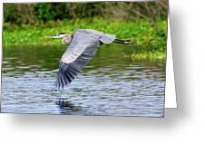 Great Blue Heron Inflight Greeting Card