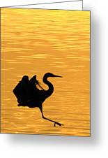 Great Blue Heron Landing In Golden Light Greeting Card