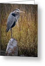 Great Blue Heron On Spool Greeting Card by Debra and Dave Vanderlaan