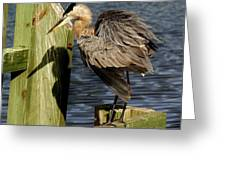 Great Blue Heron On The Block Greeting Card