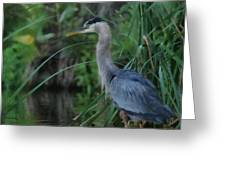 Great Blue Heron Painterly Greeting Card