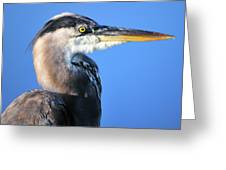 Great Blue Heron Portrait Blue Greeting Card