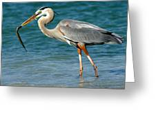 Great Blue Heron With Catch Greeting Card
