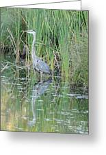 Great Blue Heron With Reflection Greeting Card
