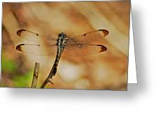 Great Blue Skimmer 8703 3326 Greeting Card