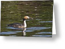 Great Crested Grebe With Breakfast Greeting Card