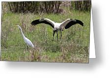 Great Egret And Wood Stork In The Marsh Greeting Card
