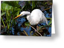 Great Egret Fishing Greeting Card